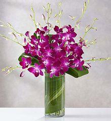 Orchid Embrace- bir21