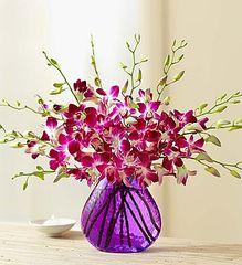Exotic Breeze™ Orchids- bir17