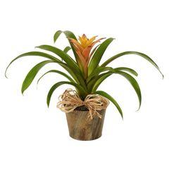 WOODLAND BROMELIAD PLANT- pla06