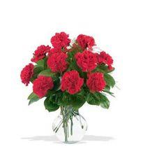 One Dozen Red Carnations - und14