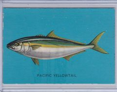 1950's Parkhurst Pixie Drink Fish Card #15 Pacific Yellowtail Issued in Canada