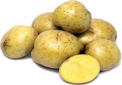 Potato Seed, Yukon Gold