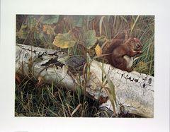 Foragers Reward, Red Squirrel by Carl Brenders