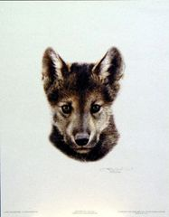 Wolf Scout 2 by Carl Brenders
