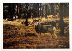 Blue River Muley by Tim Cox