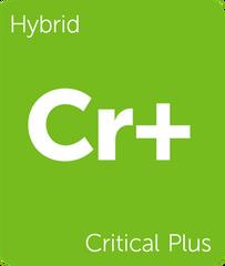 Critical Plus