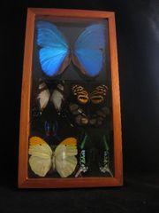 7 Peruvian Butterflies