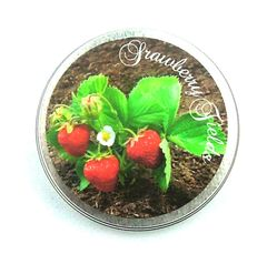 CLEARANCE Strawberry Fields Scented Soy Wax - Large