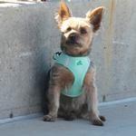 American River Ultra Choke-Free Mesh Dog Harness - Teal