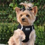 American River Ultra Choke Free Dog Harness - Black