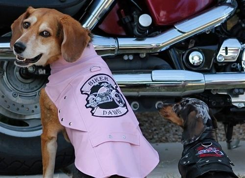 Biker Dawg Motorcycle Jacket with Harness Pink
