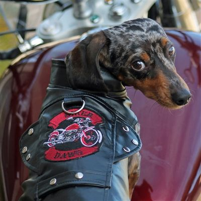 Biker Dawg Motorcycle Jacket with Harness Black