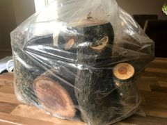 Mixed Bag of logs. consisting of various sizes of Yew, Box and Mulberry. Free postage (UK only)!!